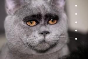 cat2.1